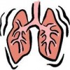 The Respiratory System: Every Breath You Take