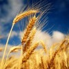 Fiber Facts and Whole-Grain Truths
